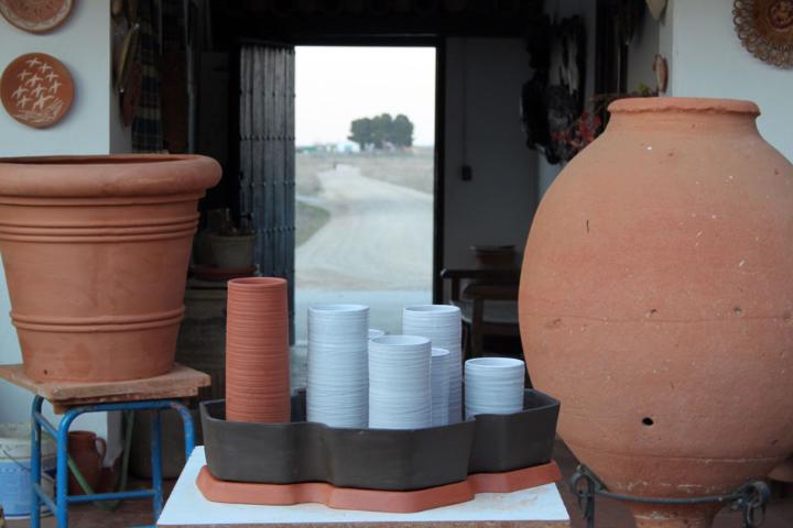 cactus alberto-gorgojo-1