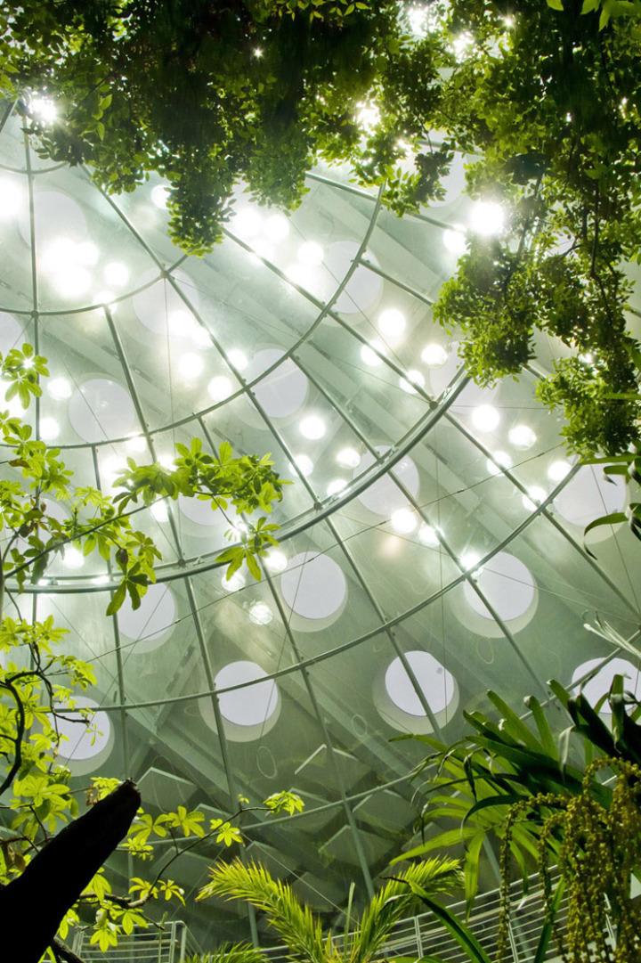 カリフォルニア·アカデミー·オブ·サイエンス - 緑 - 屋根10