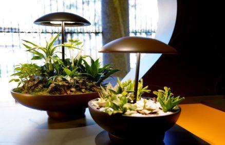 ガーデン:ミニガーデン付きテーブルランプ